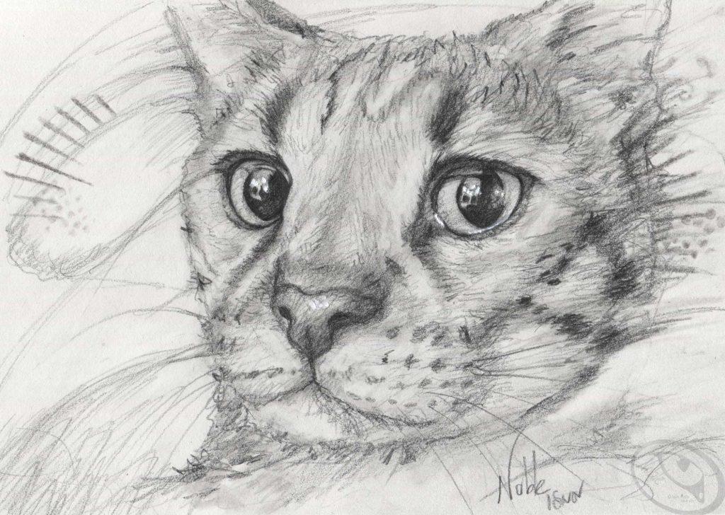 Malice, le chat aux yeux qui disent tout! - Inspiré d'une photo de Mélanie Drapeau