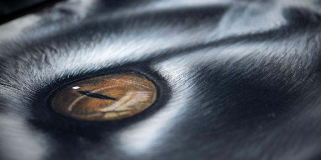 Noir eburnéen ambré