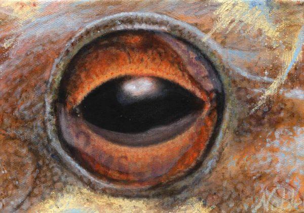 Schmidt's mountain brook frog