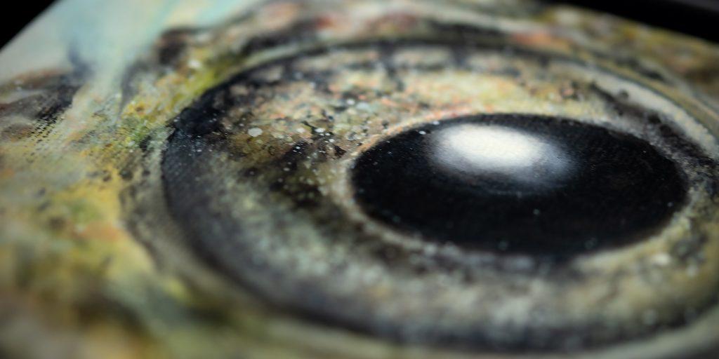 Stuart's robber frog